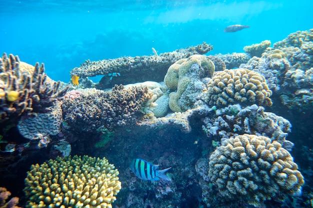 Koraalrif van de rode zee op de achtergrond van blauw water