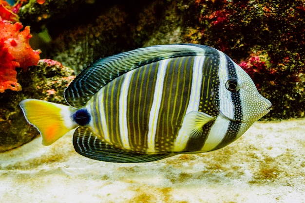 Koraalrifvissen met prachtige levendige kleuren