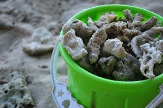Koralen in een stuk speelgoed emmer