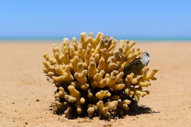 Koralen in het zand van het strand sluiten omhoog