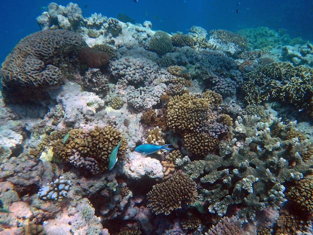 Koralen onderwater tijdens het snorkelen op het great barrier reef, australië