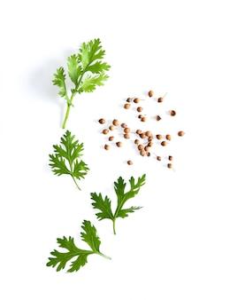 Korianderblad en zaden die op witte oppervlakte worden geïsoleerd. bovenaanzicht