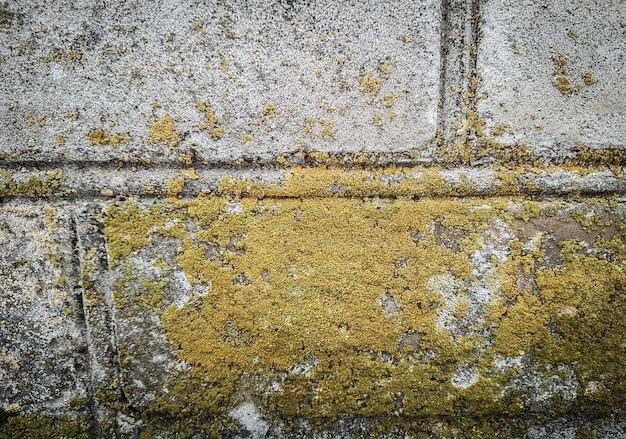 Korstmos op de muur van het oude gebouw