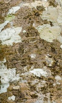 Korstmossen en groene mos groeien op hout schors