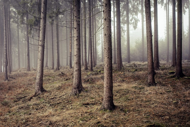 Koud bevroren bos gehuld in mist