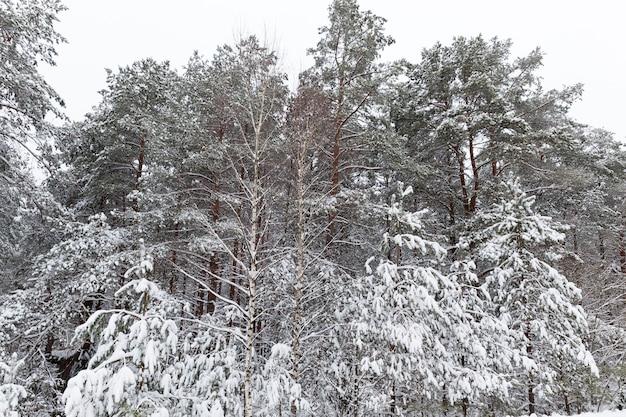 Koud winterweer in het park of bos bij vorst, loofbomen zonder bladeren in het winterseizoen, winterseizoen met sneeuw in het park of bos