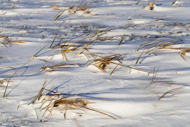 Koude sneeuw en gras