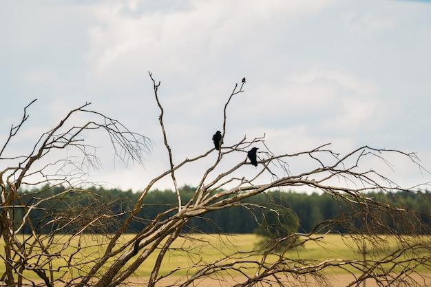 Kraaien op de takken van een droge boom tegen de hemel