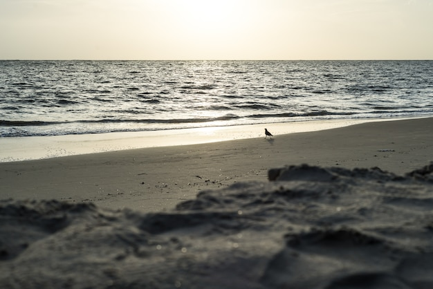 Kraaivogel strand india zonsondergang