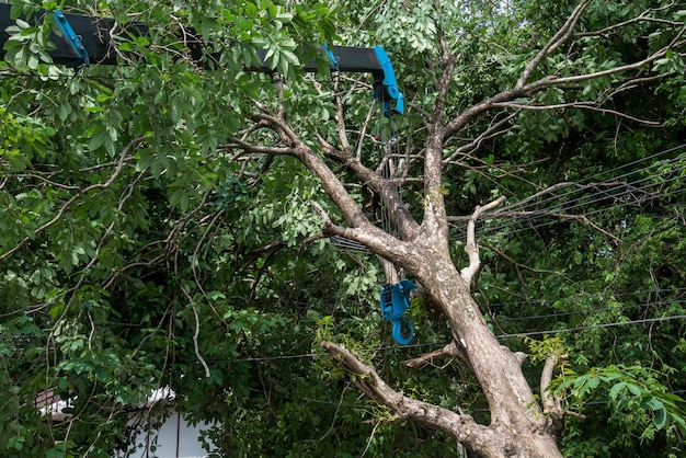 Kraan opheffing gebroken boom