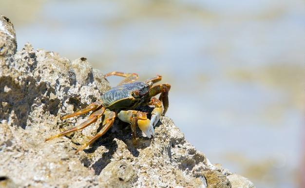 Krab op het strand