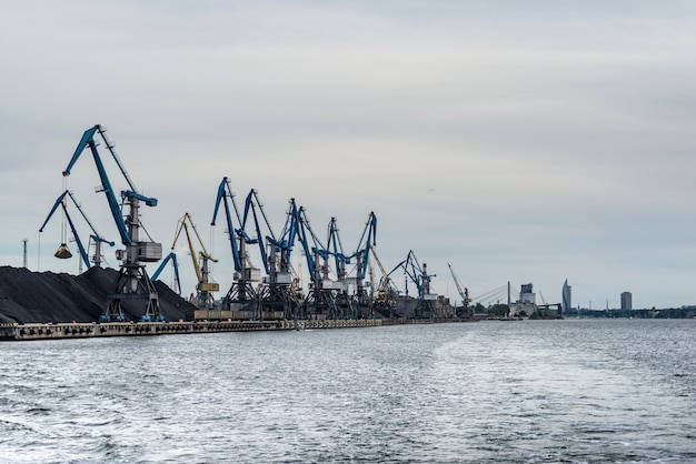 Kranen roeien langs de kustlijn van de haven