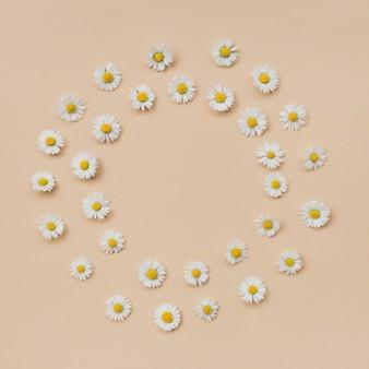 Krans gemaakt van verschillende kamille bloemen op een beige ondergrond. plat lag, bovenaanzicht, kopieer ruimte. daisy in het patroon van de cirkelvorm. plat leggen hallo lente- en zomertijd met kamillebloemen