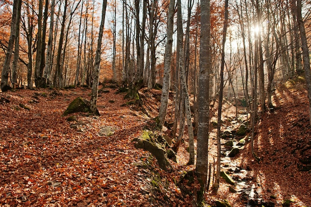 Kreek in het bos stroomt van top down achtergrondzonlicht en herfstbos.