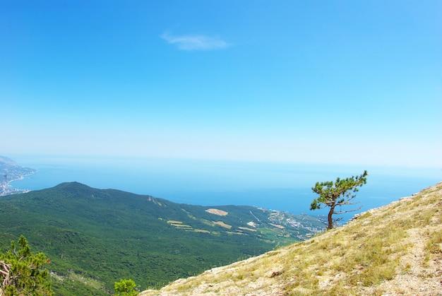 Krimbergen en bos van zomerochtend