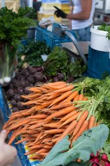 Krokante onlangs geoogste wortelen op de markt