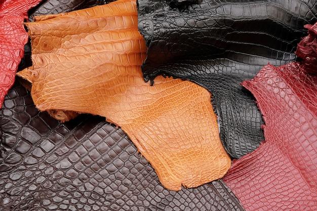 Krokodil, alligator de textuur van de buikhuid op veelkleurige achtergrond.