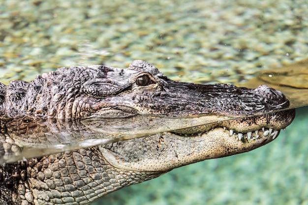 Krokodil die bij de dierentuin ligt