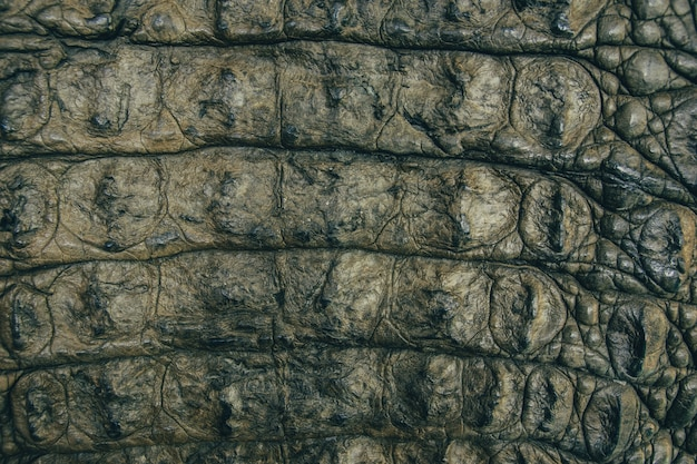 Krokodil leder textuur close-up achtergrond