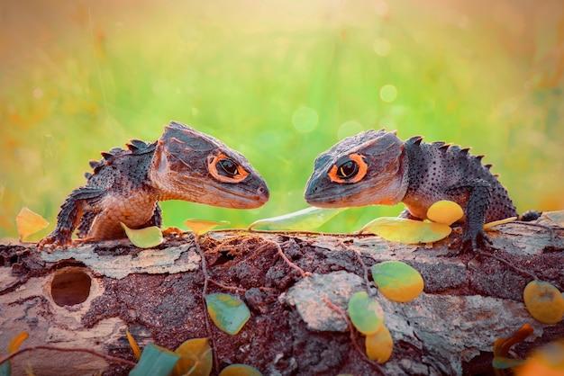 Krokodillenleer op boom in bos