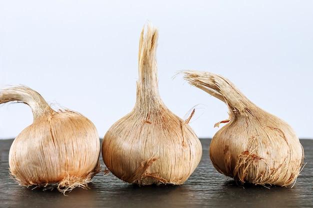 Krokusbollen sativus. bollen voor het planten van saffraan, voor het verkrijgen van de duurste kruidensaffraan.