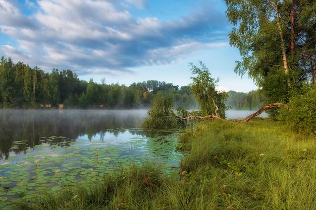 Kromme berk op een mooie mistige ochtendzonsopgang op een bosmeer met waterlelies in de zomer
