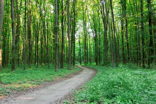 Krommevoetpad door groen bos