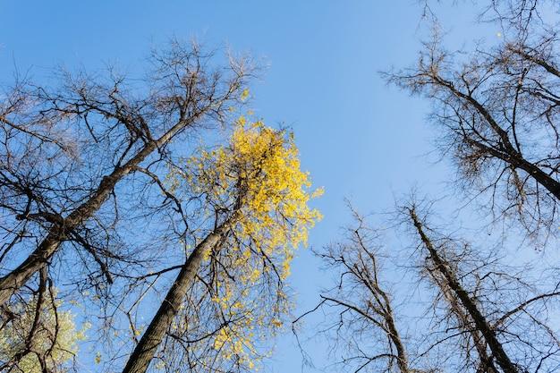 Kronen bomen tegen de achtergrond van de blauwe hemel in zonnige herfstdag