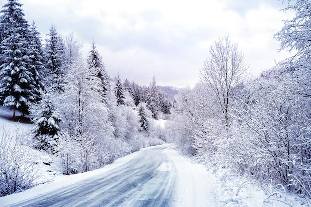 Kronkelende weg in besneeuwde bossen
