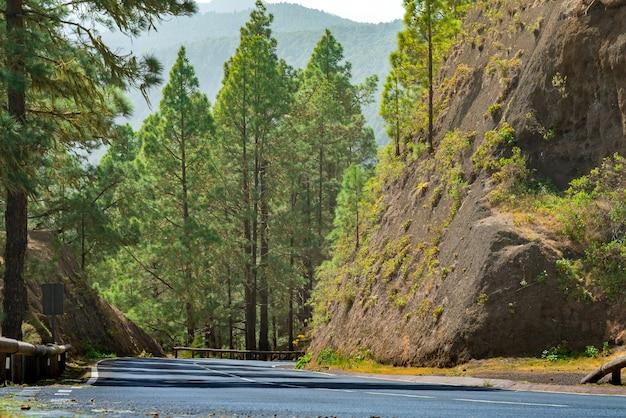 Kronkelende weg in een bergbos. helder groen bos en felle zon schijnen.