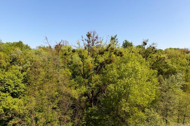 Kroon en toppen van gemengd bos met loof- en naaldbomen, zomer- of lentelandschap