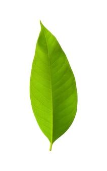 Kruid plant textuur groene achtergrond