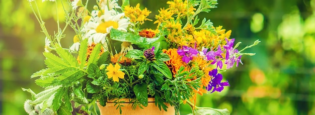 Kruiden in een vijzel. medicinale planten. foto.