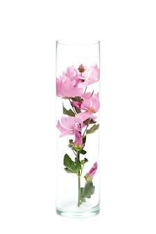 Kruiden wilde bloemen in een glazen kolf, isoleren. natuurlijke cosmetica, bloemenextract