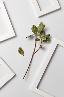 Kruidensamenstelling met vers natuurlijk ficusblad en lege kaders op een lichtgrijze muur. plaats voor tekst. plat leggen.
