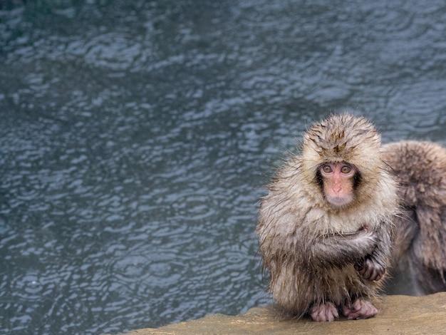 Kruip lekker bij macaque