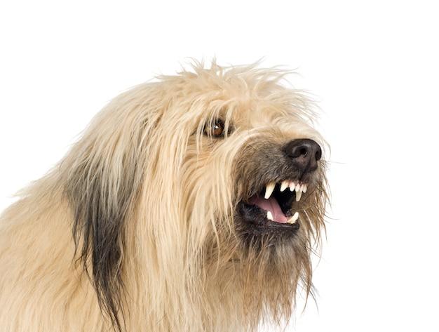 Kruising hond met 4 jaar. geïsoleerd hondportret