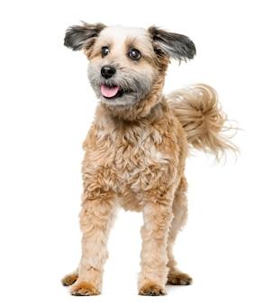 Kruising hond staande voor een witte muur