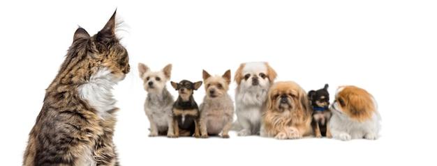 Kruising katten die terugkijken op een groep kruising honden