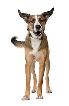 Kruising of gemengd ras hond met 11 maanden. geïsoleerd hondportret