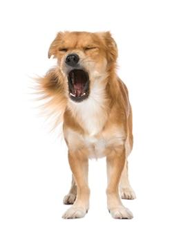 Kruising of gemengd ras hond met 2 jaar.
