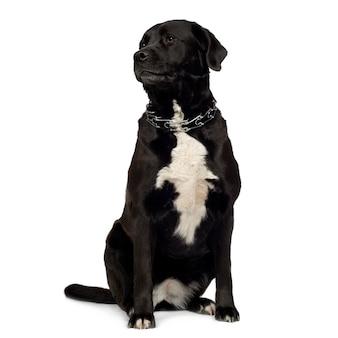 Kruising of gemengd rassenhondportret geïsoleerd