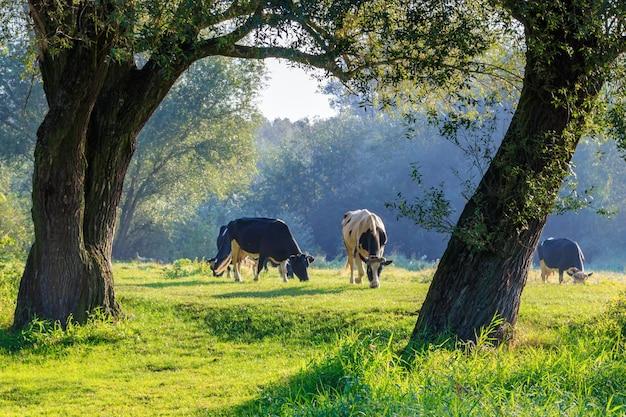 Kudde koeien grazen op rivieroever tussen bomen in zonnige ochtend