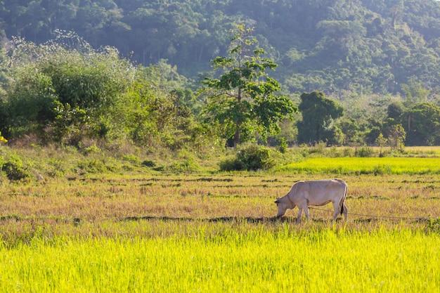 Kudde koeien op zomer groen veld. landbouw landbouw landelijke weide