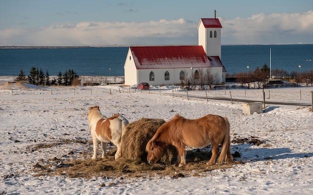 Kudde paarden grazen met een kerk op de achtergrond