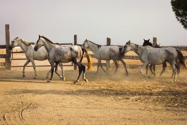 Kudde paarden
