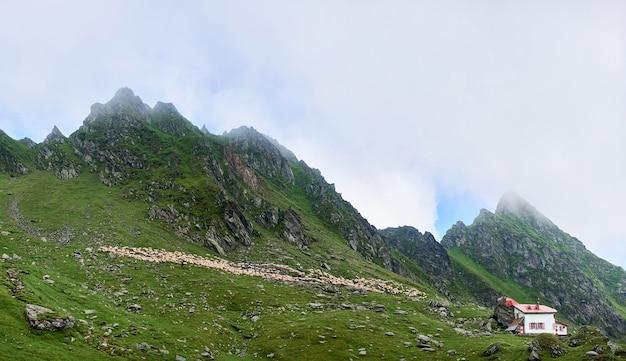 Kudde schapen op alpenweide in de bergen van vallei fagaras