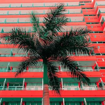 Kunst is minimaal. palma en stedelijke locatie fashion color