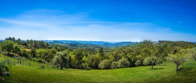 Kunst landelijk landschap. veld en gras. zomertijd op het platteland