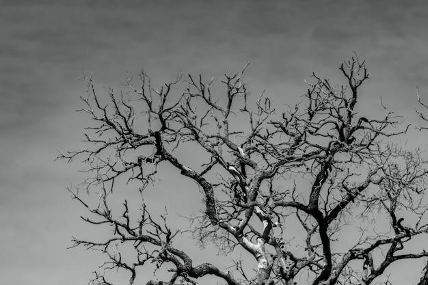 Kunstbeeld van dode boom met takken. dood, verdrietig, jammer, hopeloos en wanhoop. droogte van de wereld door de opwarming van de aarde. natuurlijke dood. zwart-wit foto van dode boom.